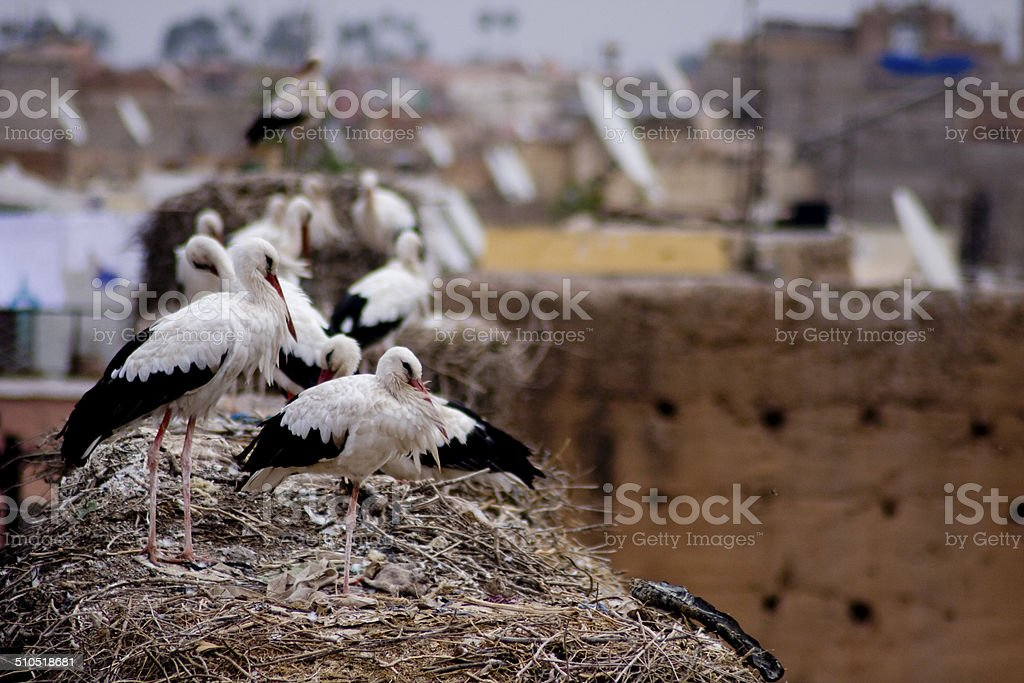 Stork nests on the walls od El Badi Palace, Marrakesh stock photo