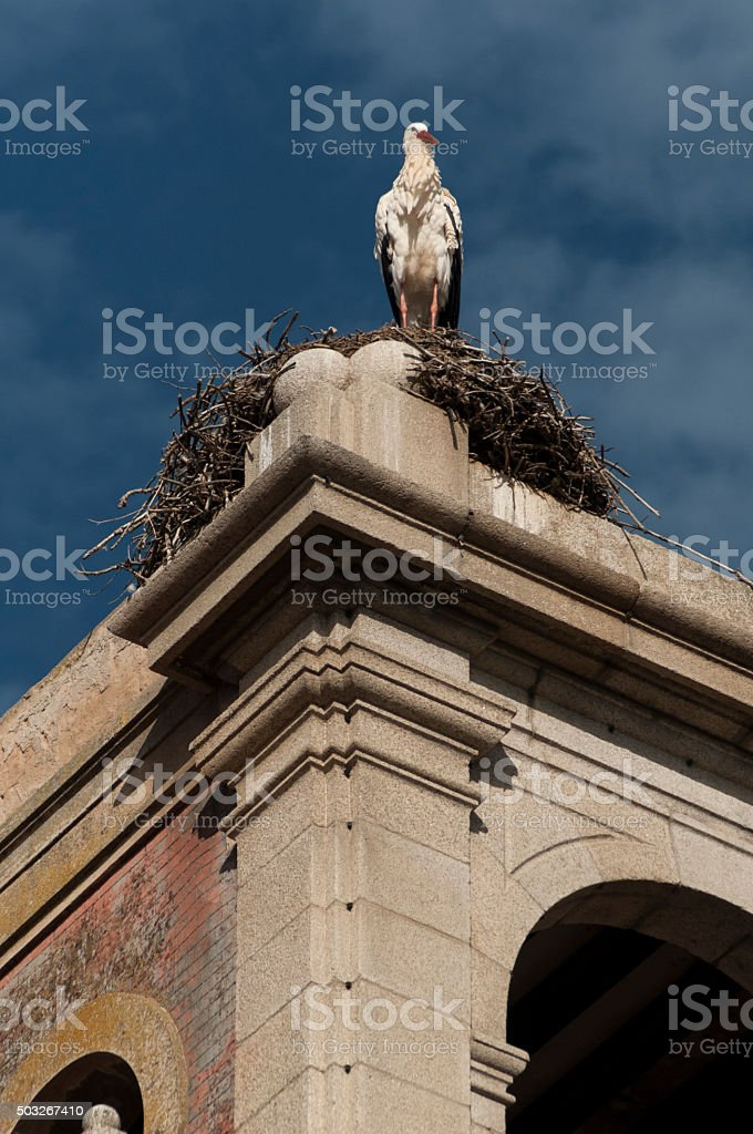 stork on a nest stock photo