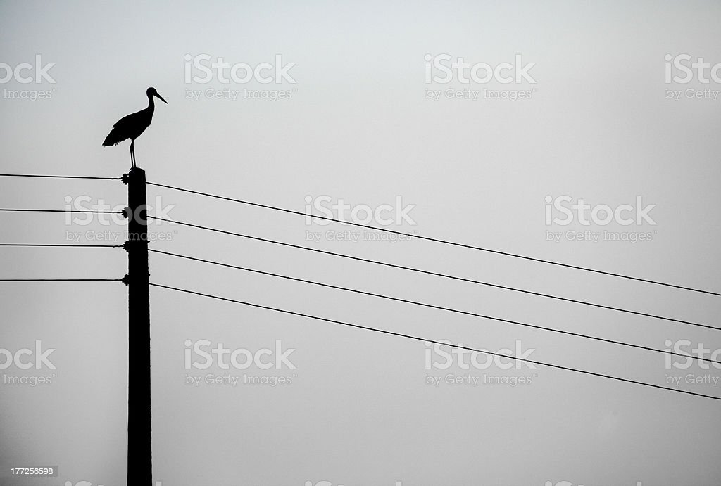 Stork on a post stock photo