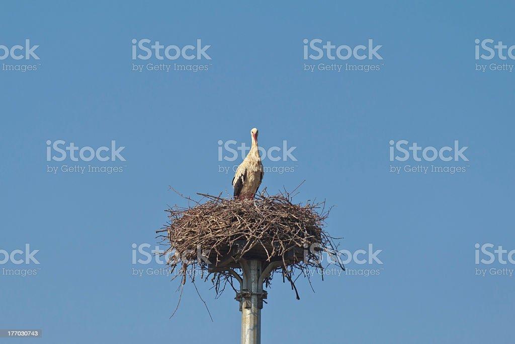 stork on a street lamp stock photo