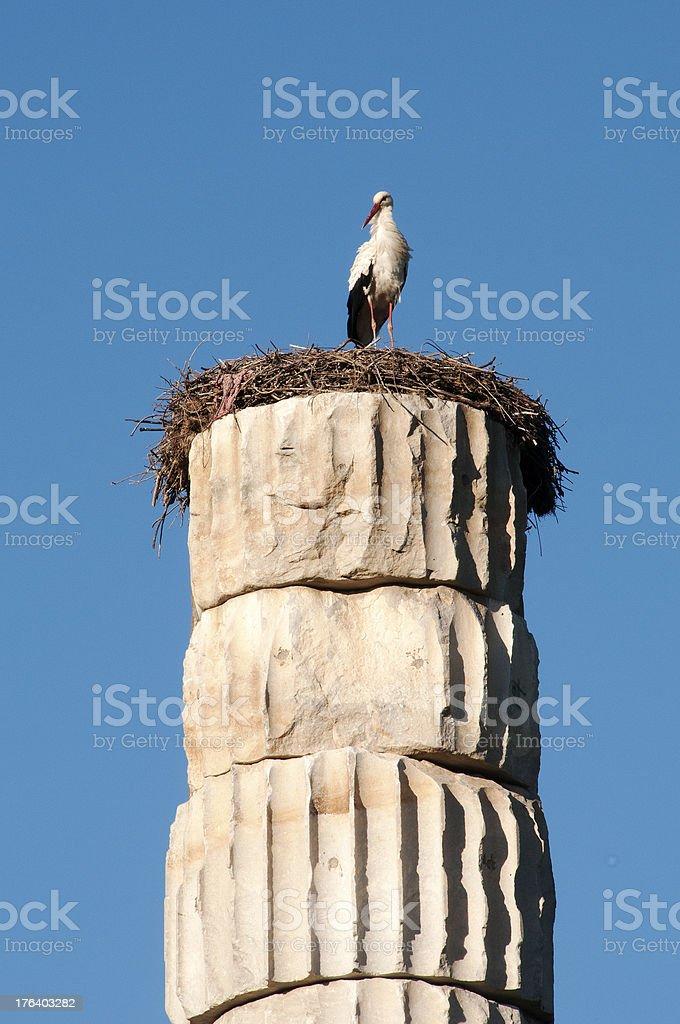 Stork on column, Ephesus, Turkey royalty-free stock photo