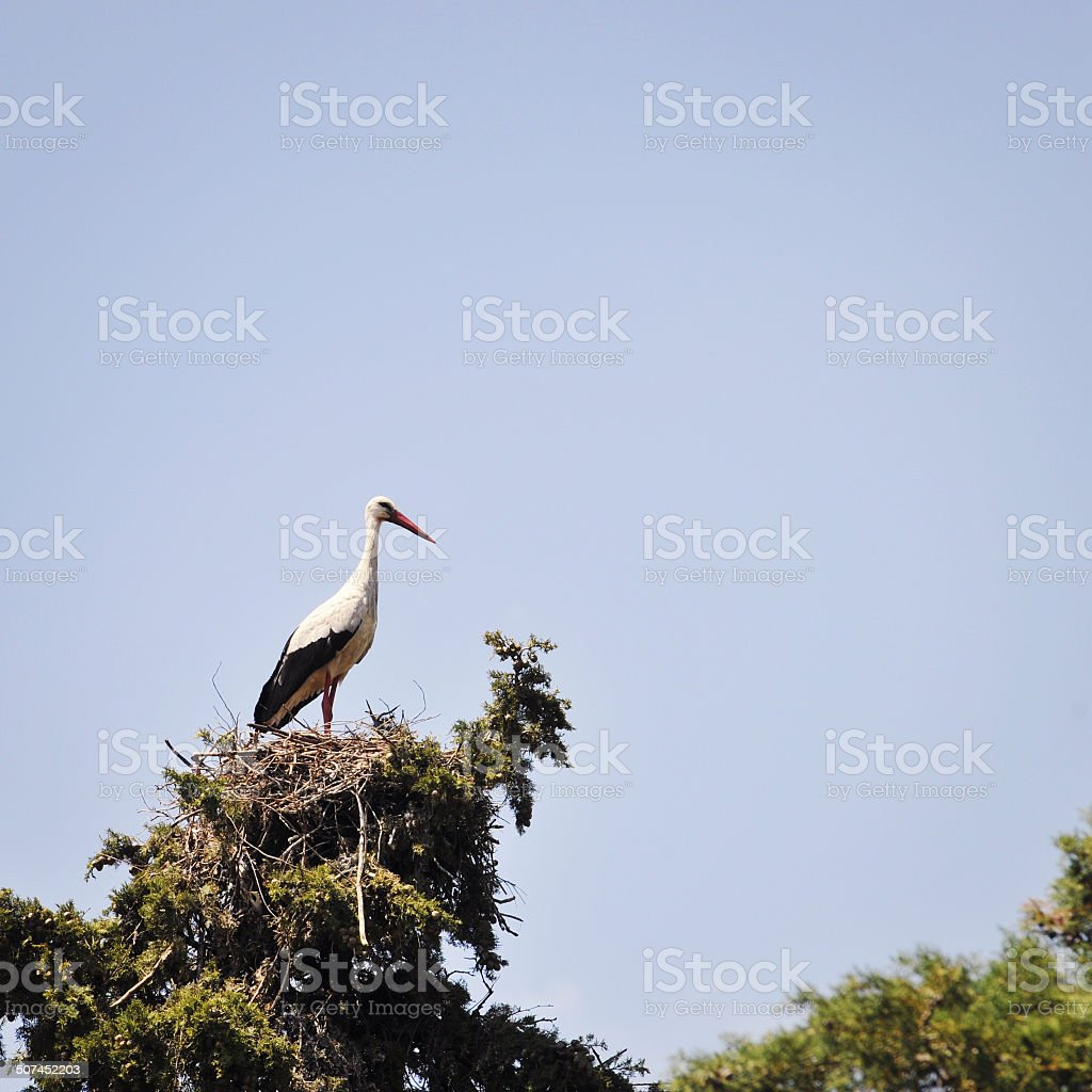Stork on top of a nest stock photo
