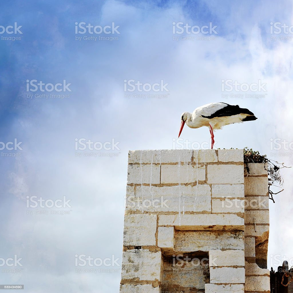 Stork on top of the nest stock photo