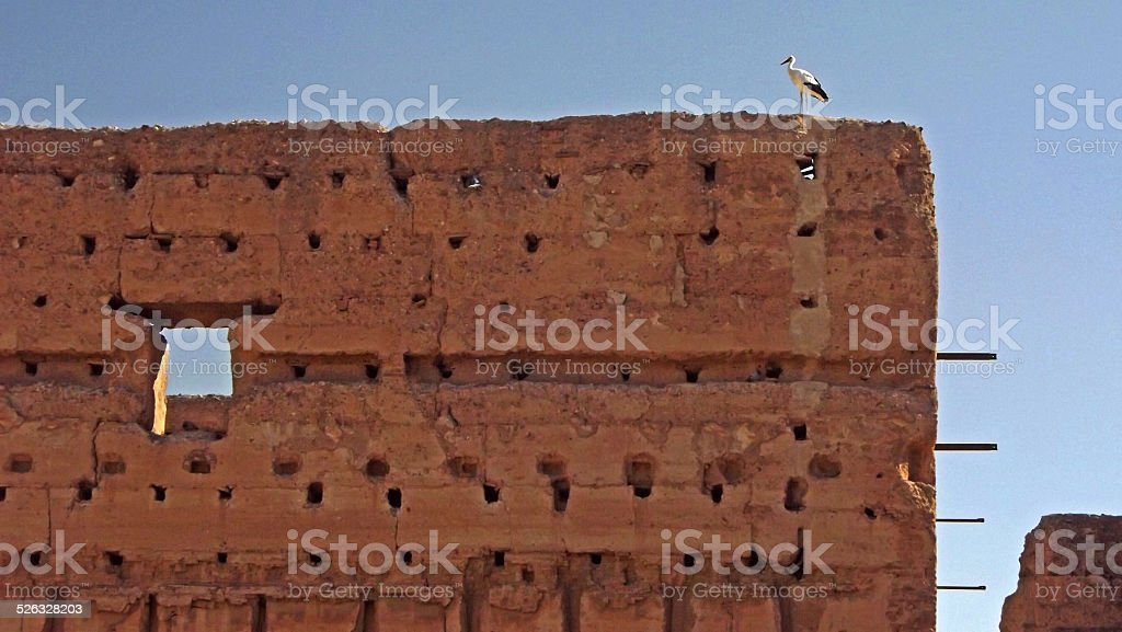 Stork on wall of El Badi Palace stock photo