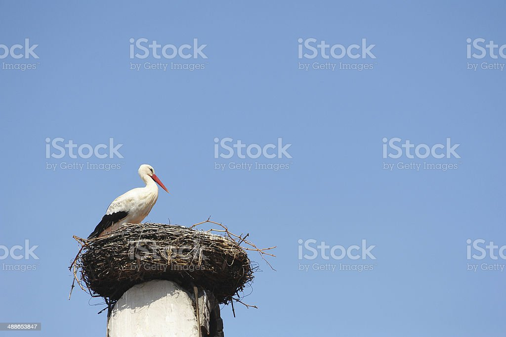 Stork perches in his nest stock photo