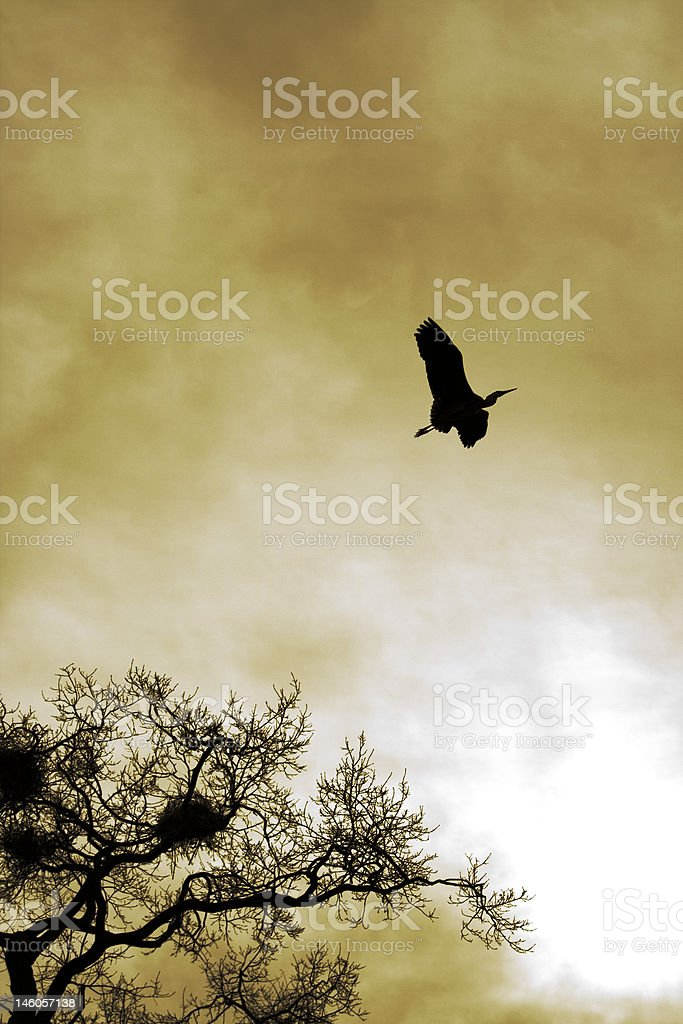 stork royalty-free stock photo