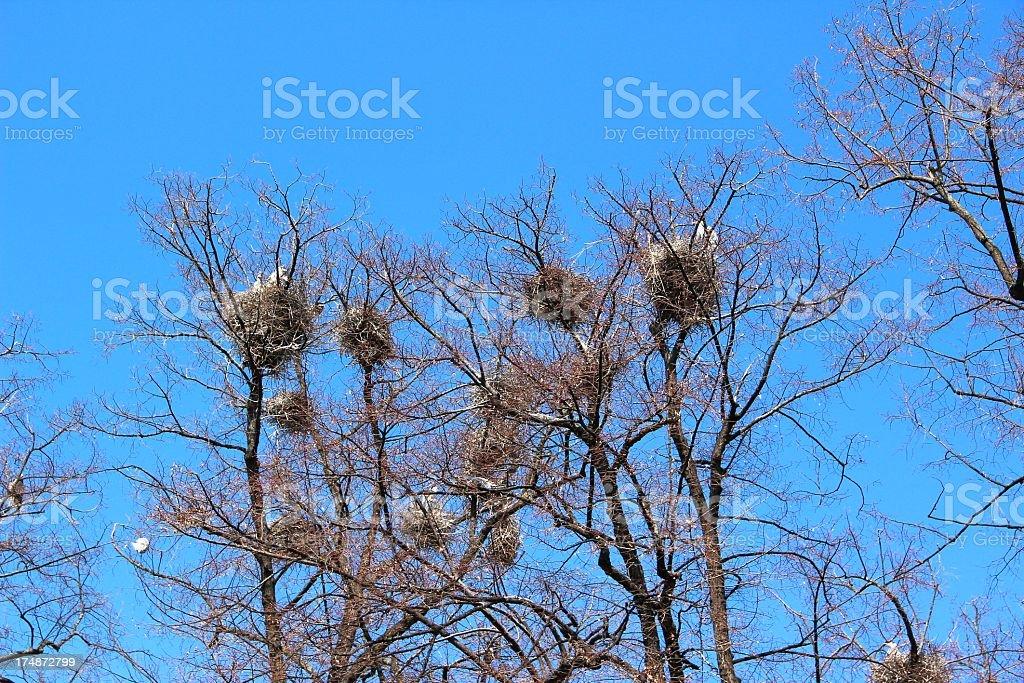 Storks commune stock photo