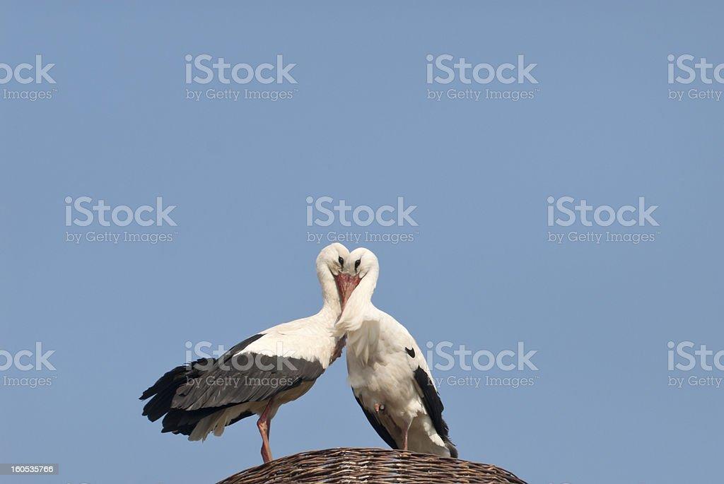 storks couple royalty-free stock photo