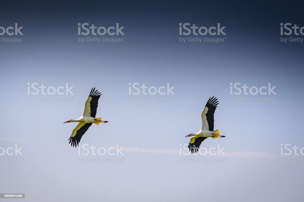 Störche in der Luft stock photo