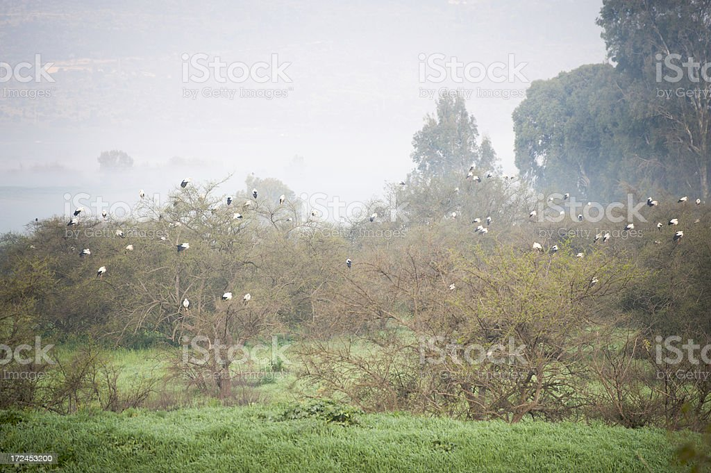 Storks in the Mist royalty-free stock photo