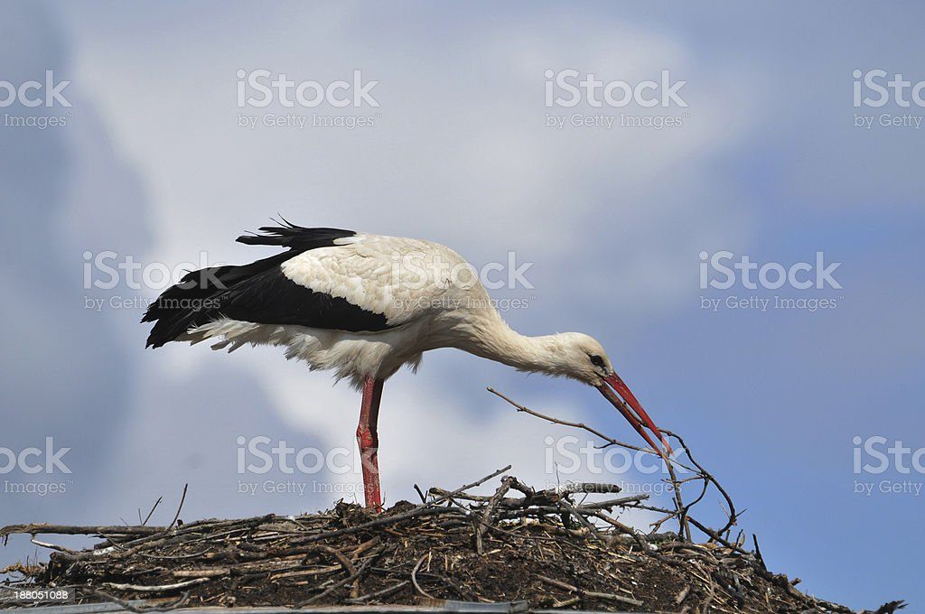 Storks in the nest stock photo