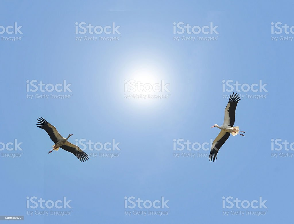Storks in the sky royalty-free stock photo