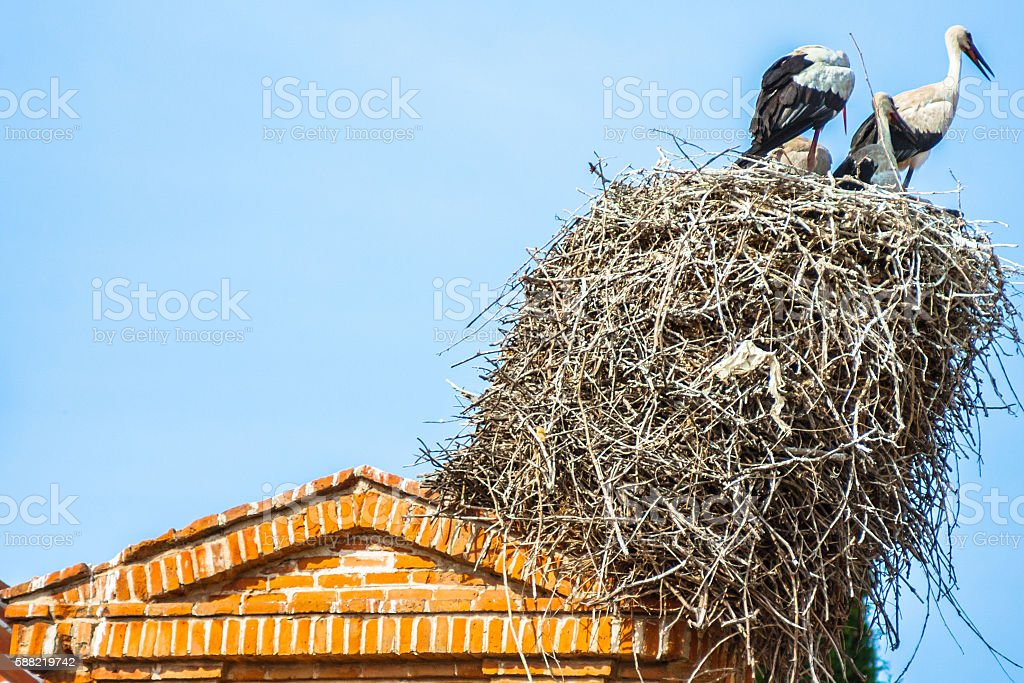 Storks' Nest on Rooftop stock photo