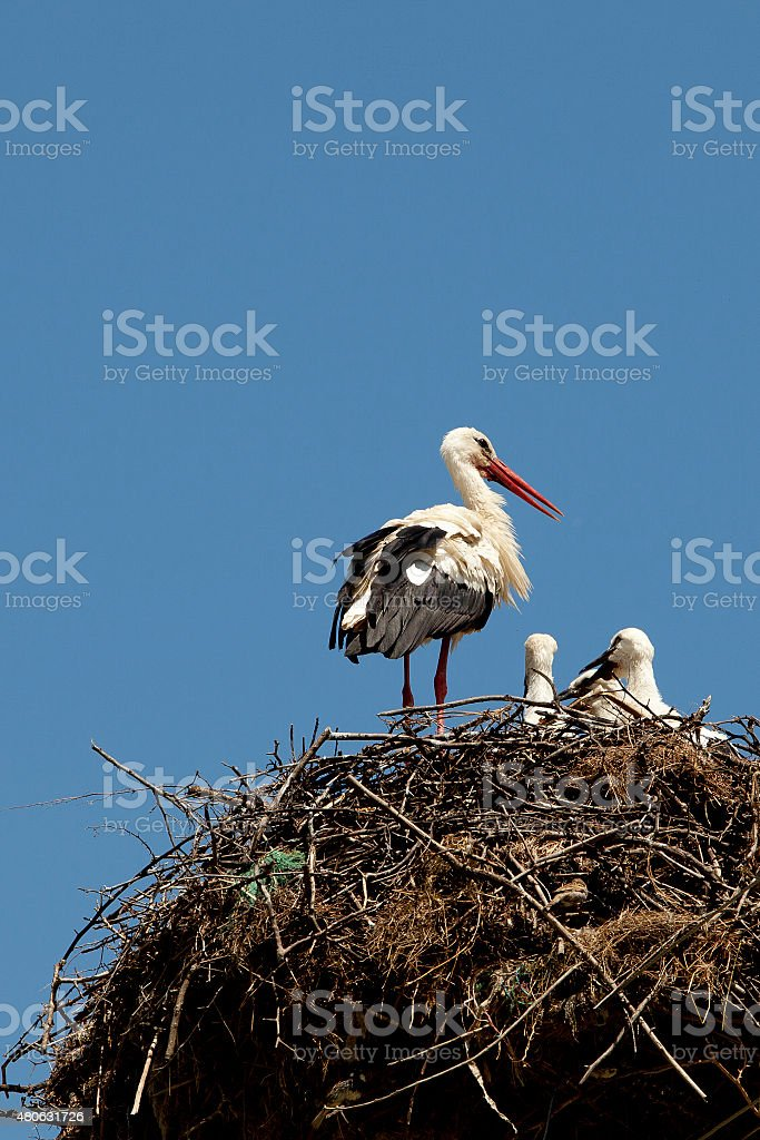 stork's nest stock photo