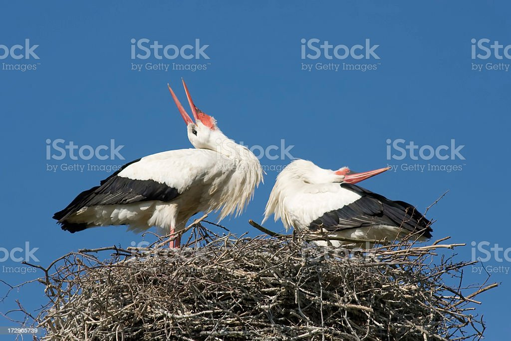 Storks on their nest royalty-free stock photo