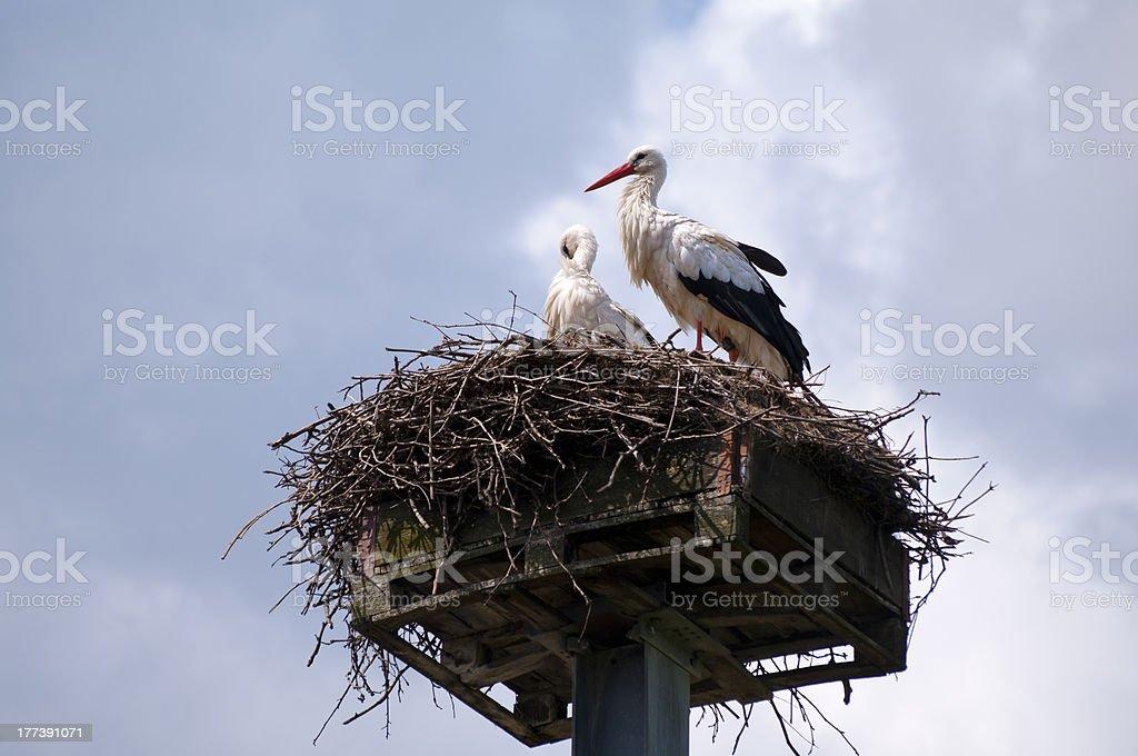 Storks royalty-free stock photo