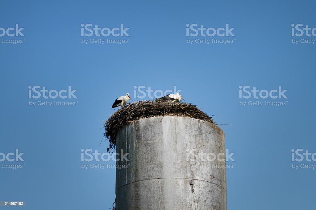 Storks sitting in a nest. stock photo