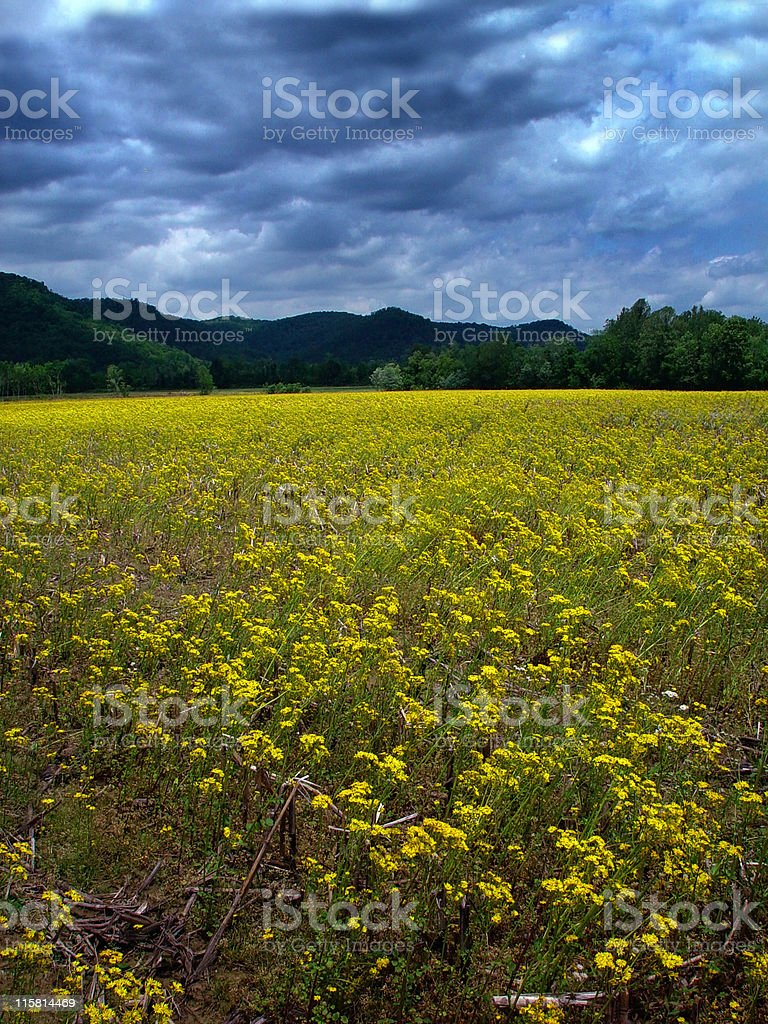 Storm & Golden Flowers royalty-free stock photo