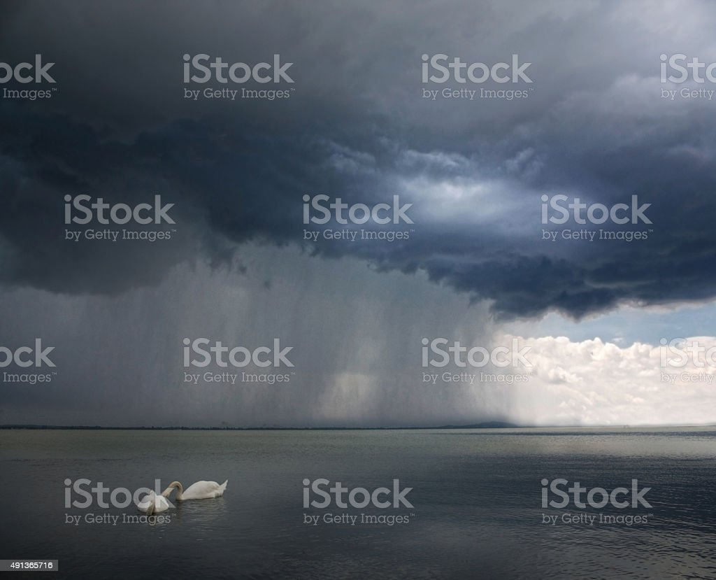 Storm appraching - swans on the foreground stock photo
