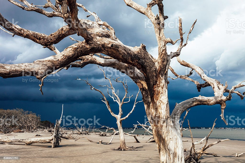 Storm approaching to Driftwood beach, Jekyll Island, Georgia. stock photo
