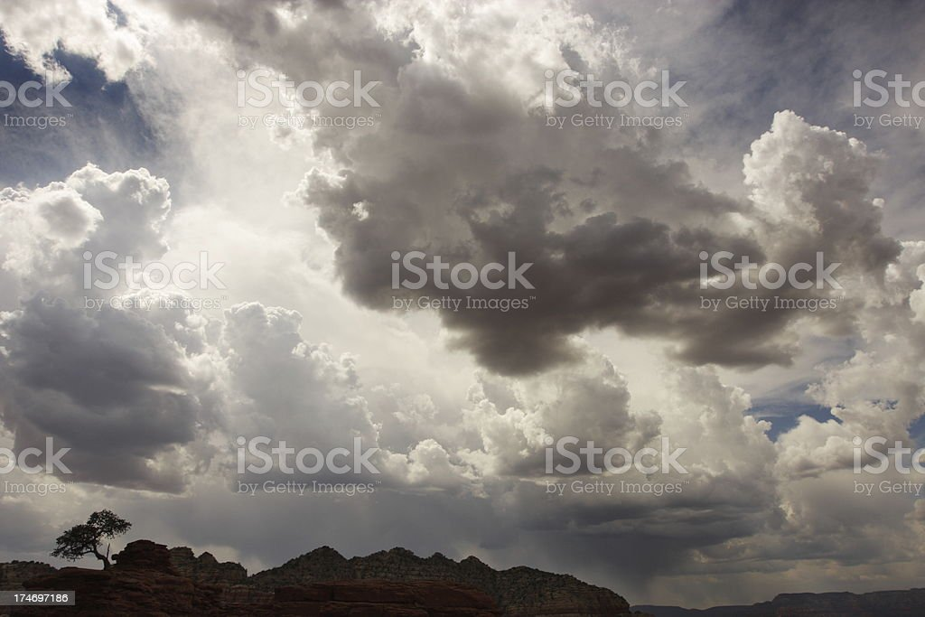 Storm Cloud Sky Desert Tree Silhouette royalty-free stock photo