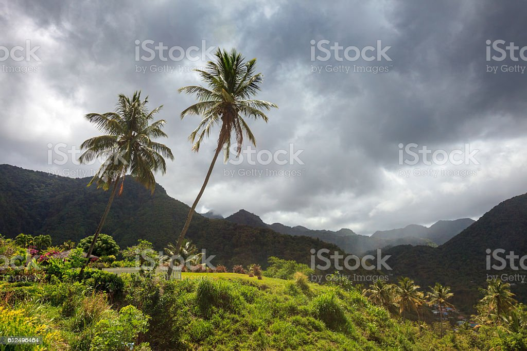 Storm clouds and palm trees over mountains of Caribbean island stock photo