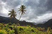 Storm clouds and palm trees over mountains of Caribbean island