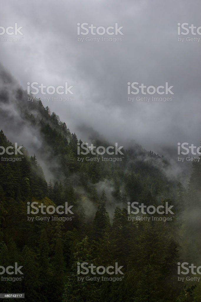 Storm clouds going through trees on the mountain stock photo