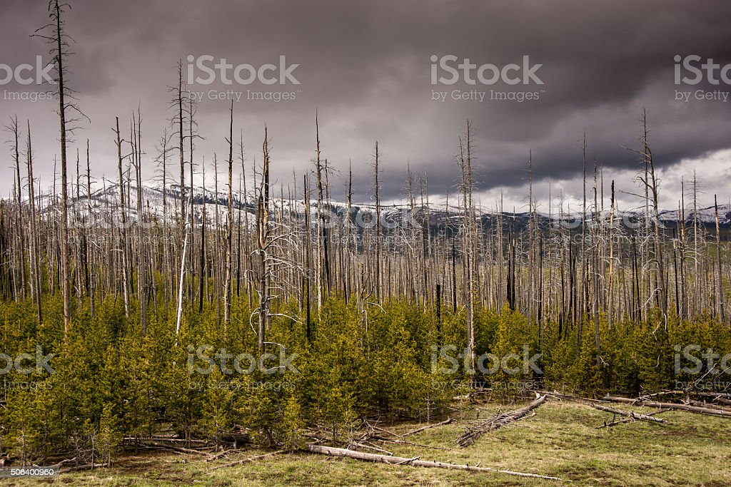 Storm Clouds on Mount Washburn stock photo