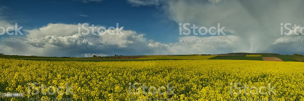 Storm clouds over a canola field stock photo
