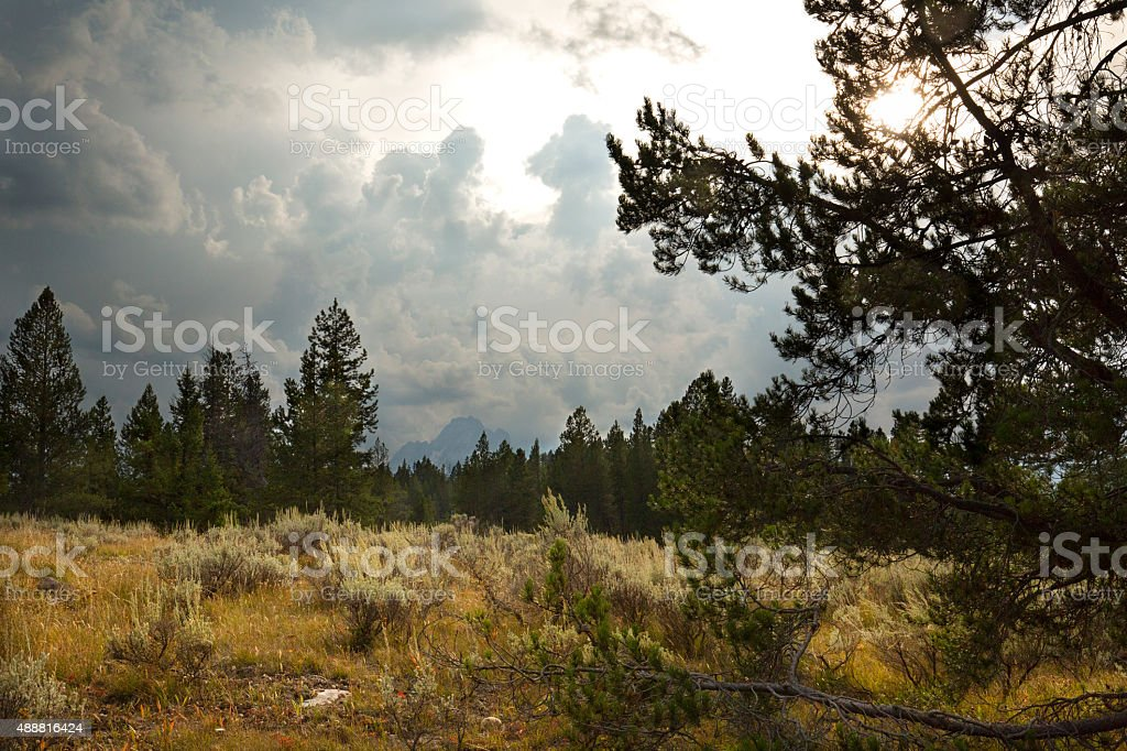 Storm clouds over a forest opening, Teton National Park, Wyoming. stock photo