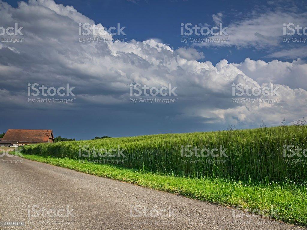 Storm clouds over the barley field, Gewitterwolken über dem Gerstenfeld stock photo