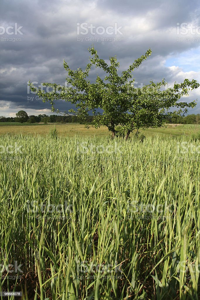 Storm clouds over the field royalty-free stock photo