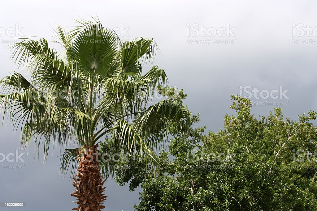 Storm Clouds Over Trees royalty-free stock photo