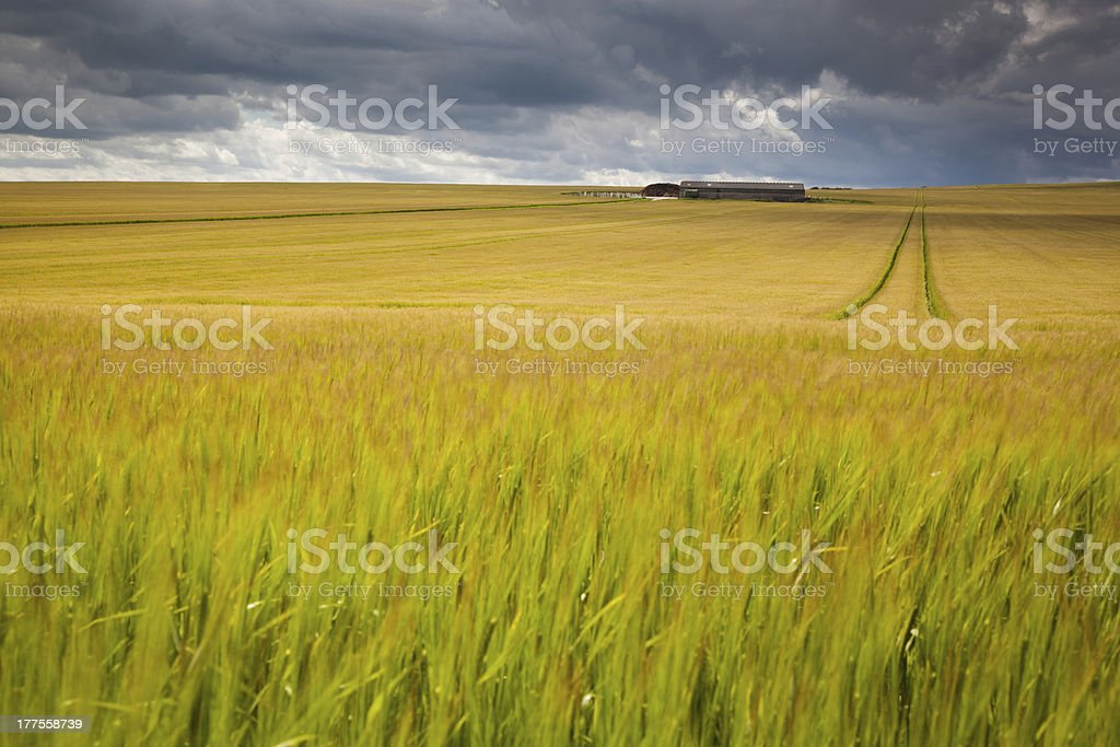 Storm Couds over a wheat field stock photo