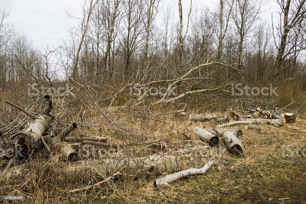 Storm damage in a forest. stock photo