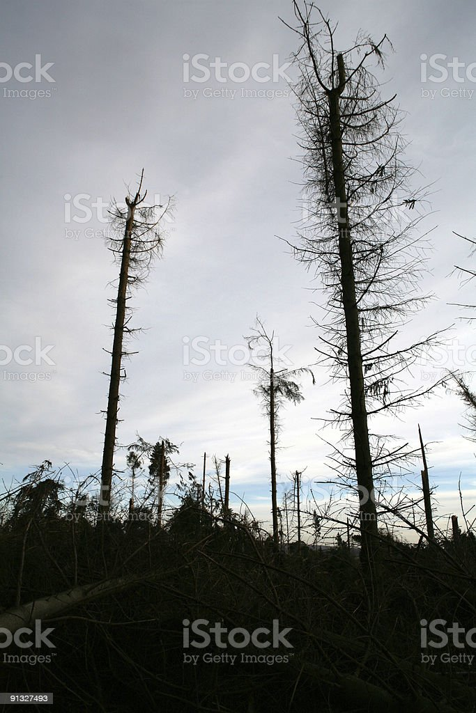 Storm damage in a forest stock photo