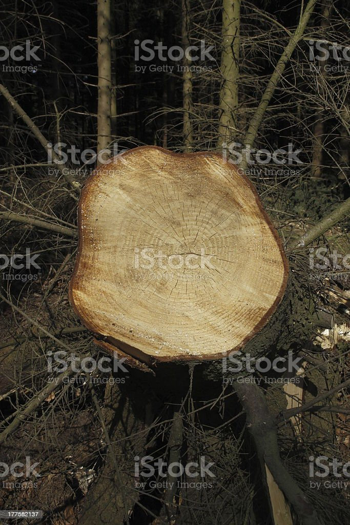 Storm damage in the forest stock photo