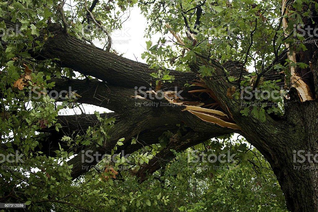 Storm Damage Large Branch stock photo