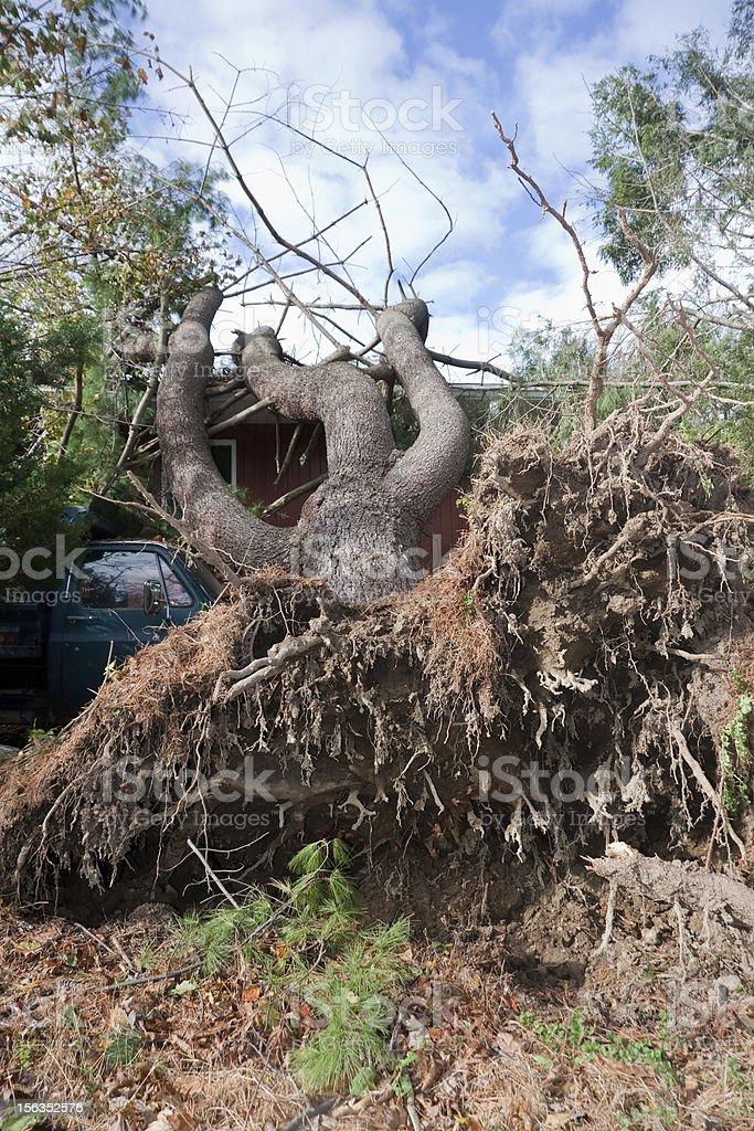 storm damage Tree on house stock photo