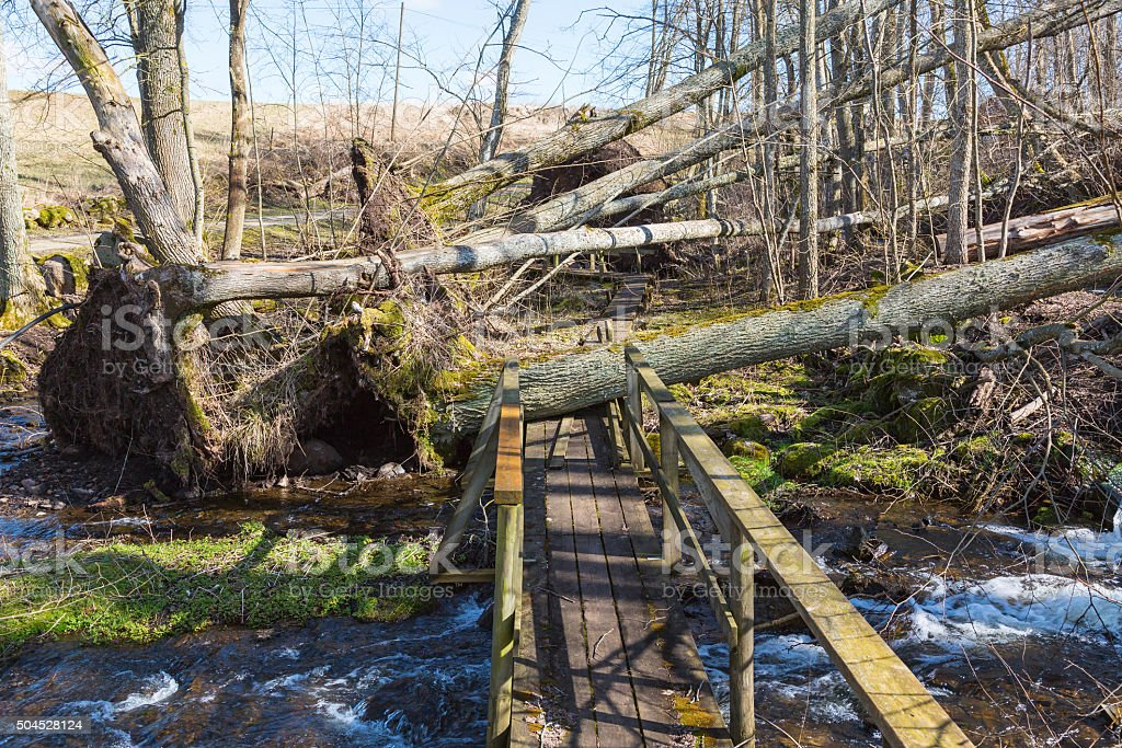 Storm damaged forest by hiking trails stock photo