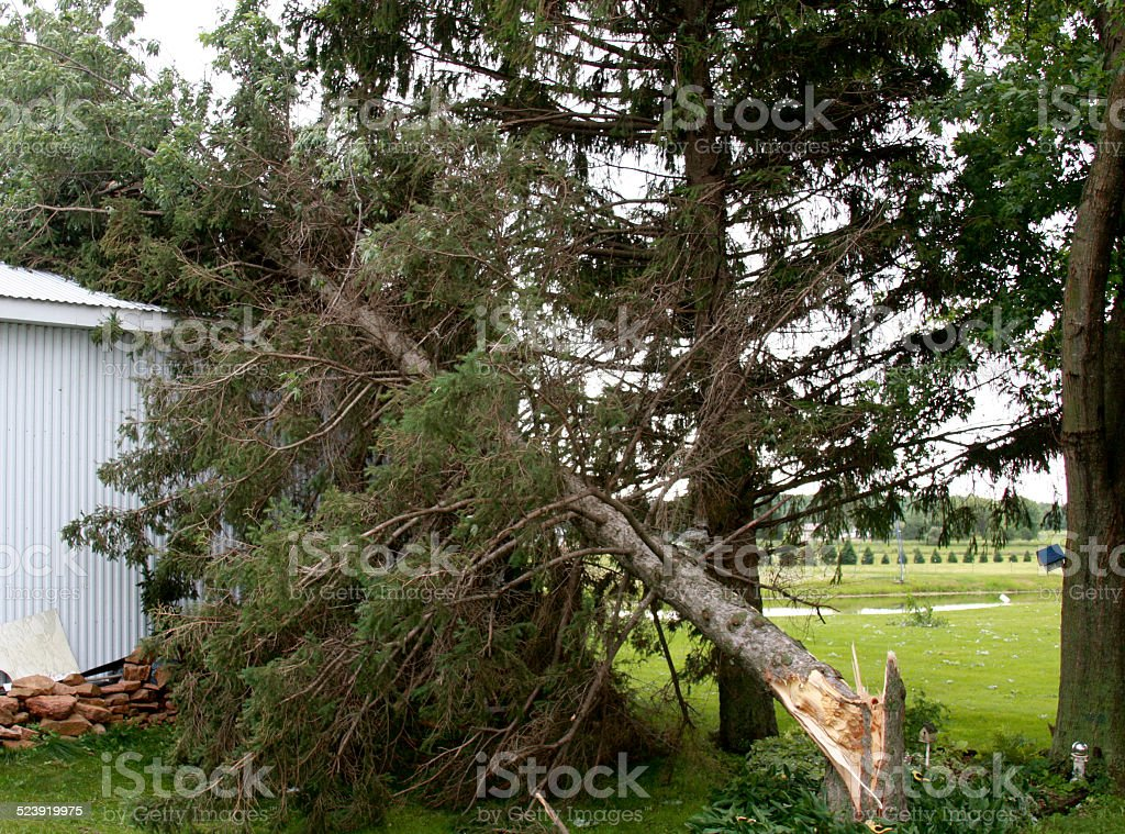 Storm damaged tree and building stock photo