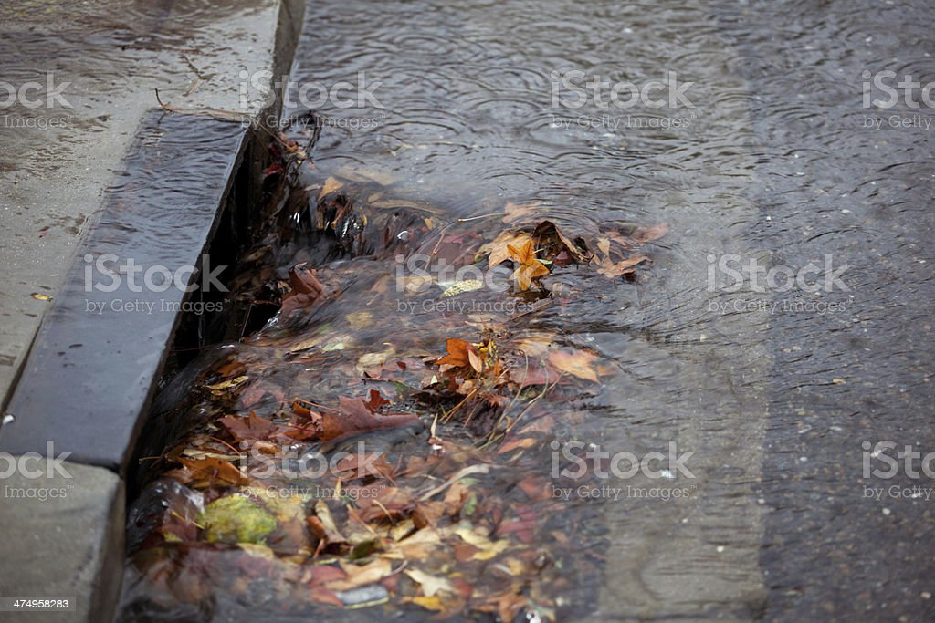 Storm drain partially blocked by fallen leaves on rainy day stock photo