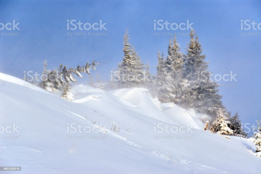 Storm in mountain, strong wind oppression tree stock photo