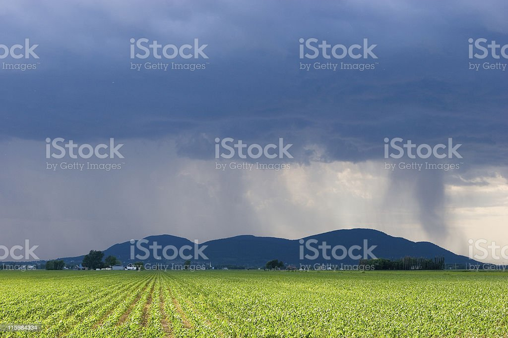 Storm over a Corn Field stock photo