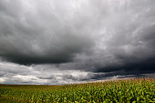 Storm over corn fields