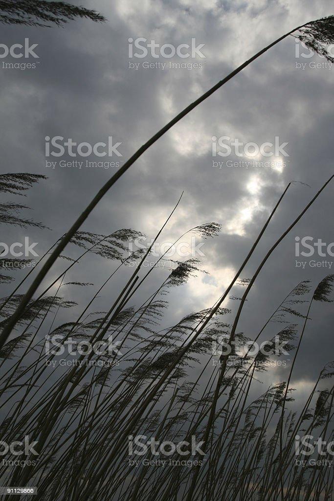 Storm royalty-free stock photo