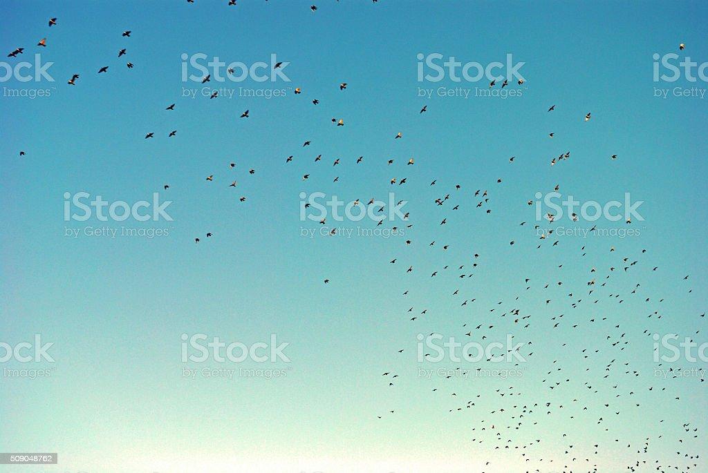 Stormo di uccelli stock photo