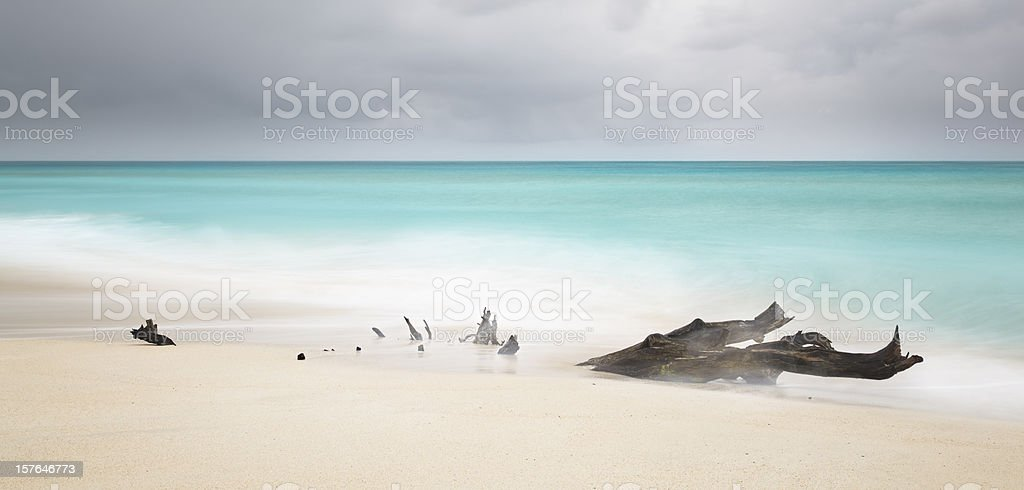 Stormy Caribbean Beach With Driftwood royalty-free stock photo