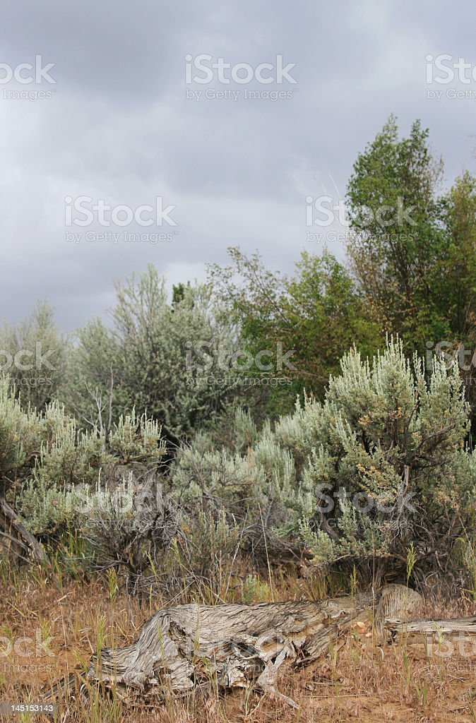 Stormy Desert stock photo